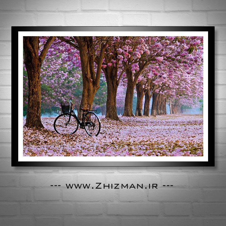 عکس طبیعت بهاری همراه با شکوفه درختان