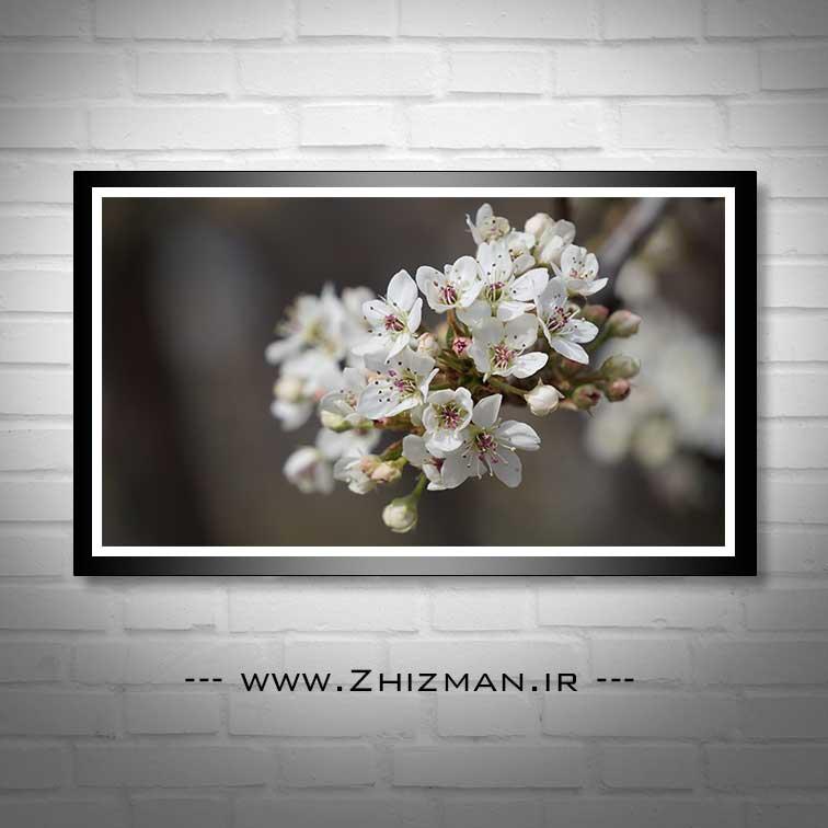 عکس شکوفه درخت