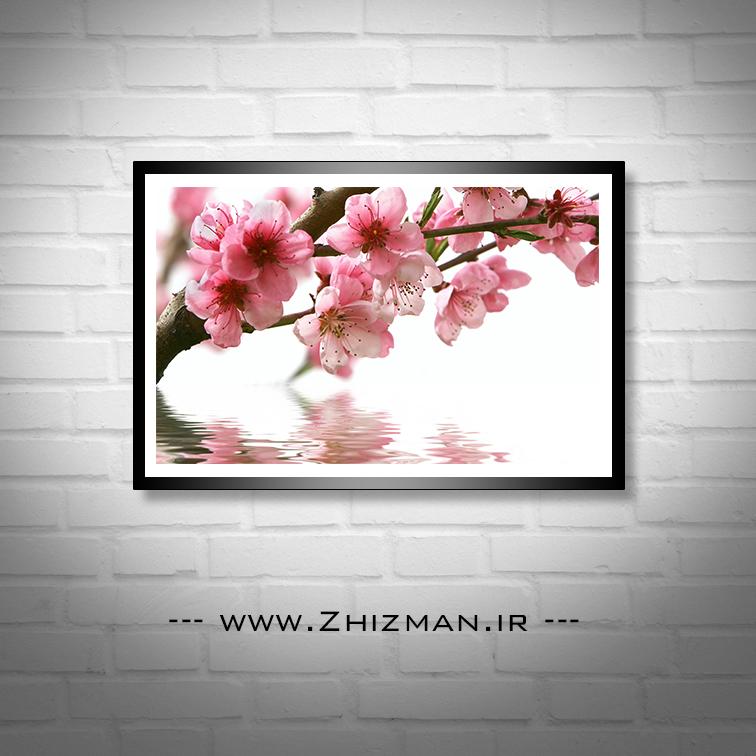 عکس انعکاس شکوفه درخت در آب