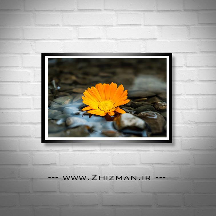 عکس گل شناور روی آب