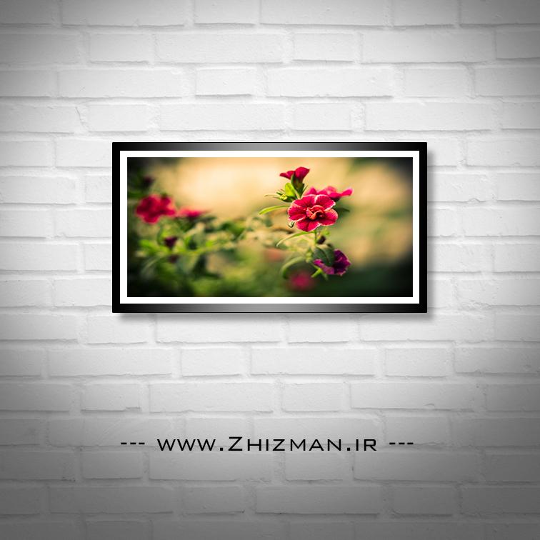 عکس گل قرمز با زمینه محو