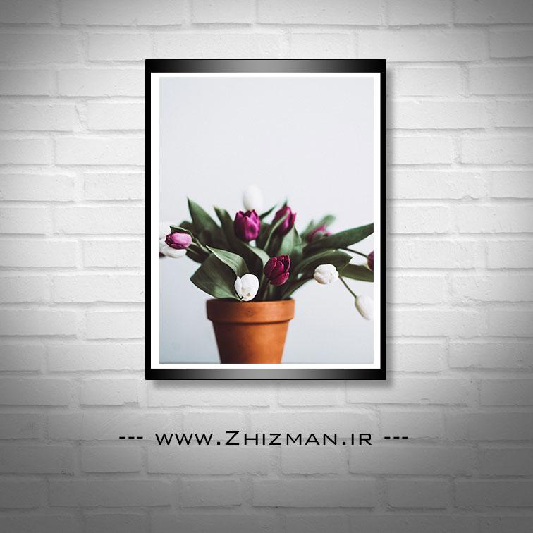 عکس گل لاله سفید و بنفش