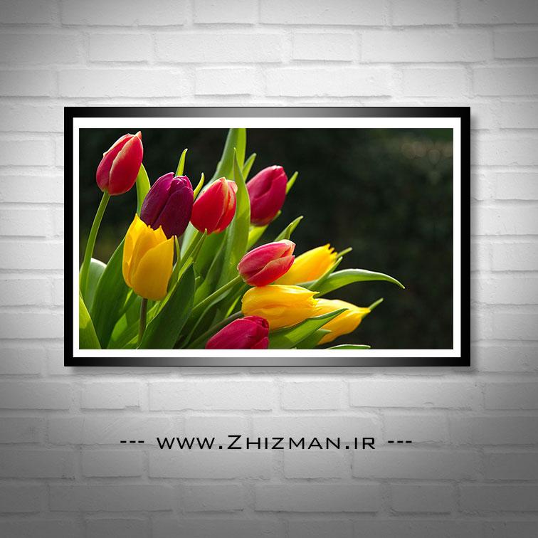 عکس گل های لاله