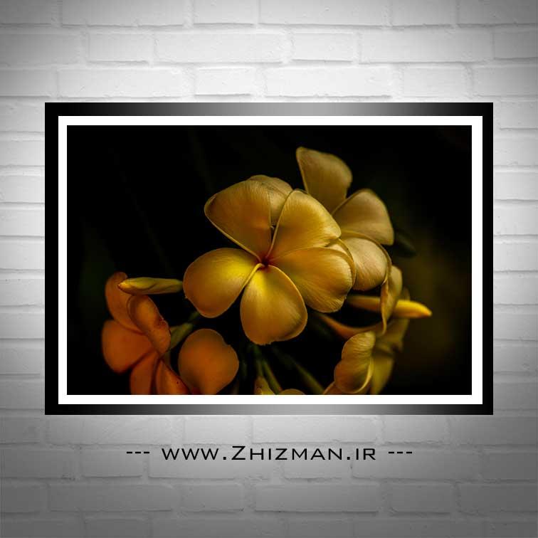 عکس گل برای تصویر زمینه با کیفیت بالا