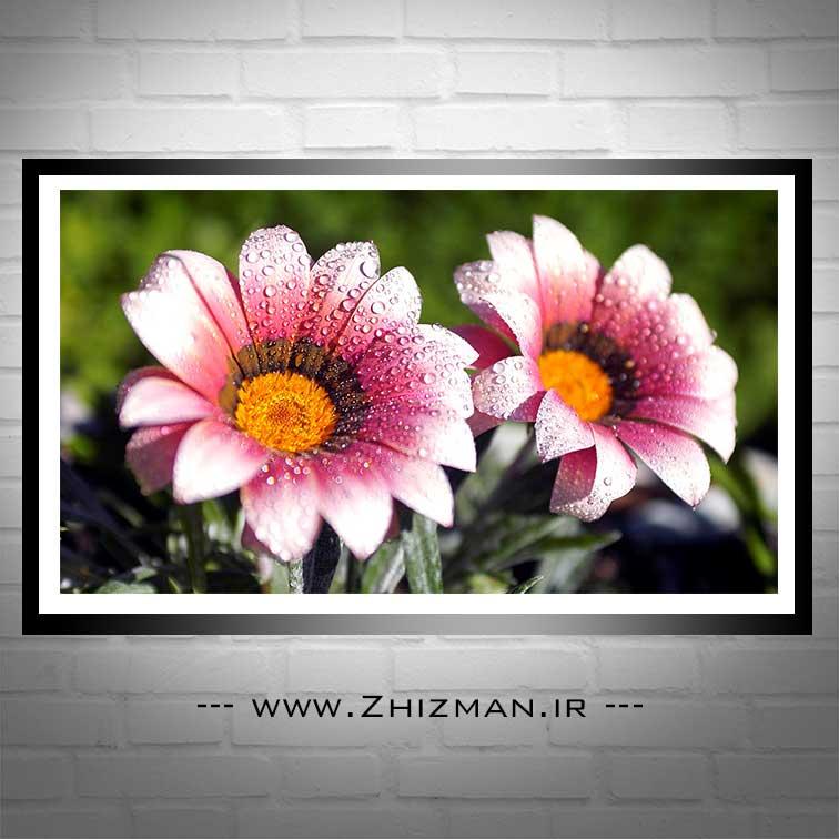 عکس گل با کیفیت hd