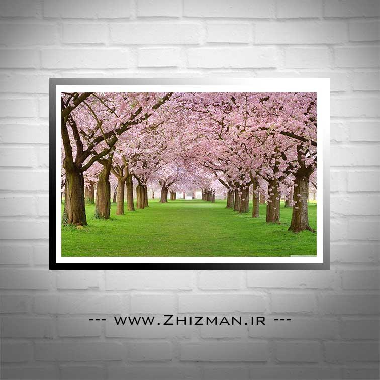 عکس درخت با شکوفه های بهاری
