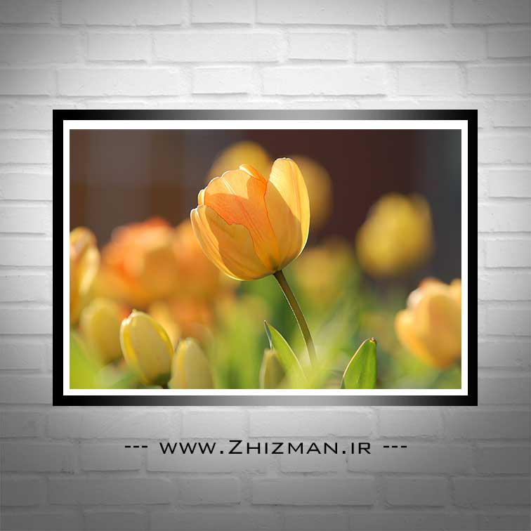 عکس با کیفیت گل لاله زرد