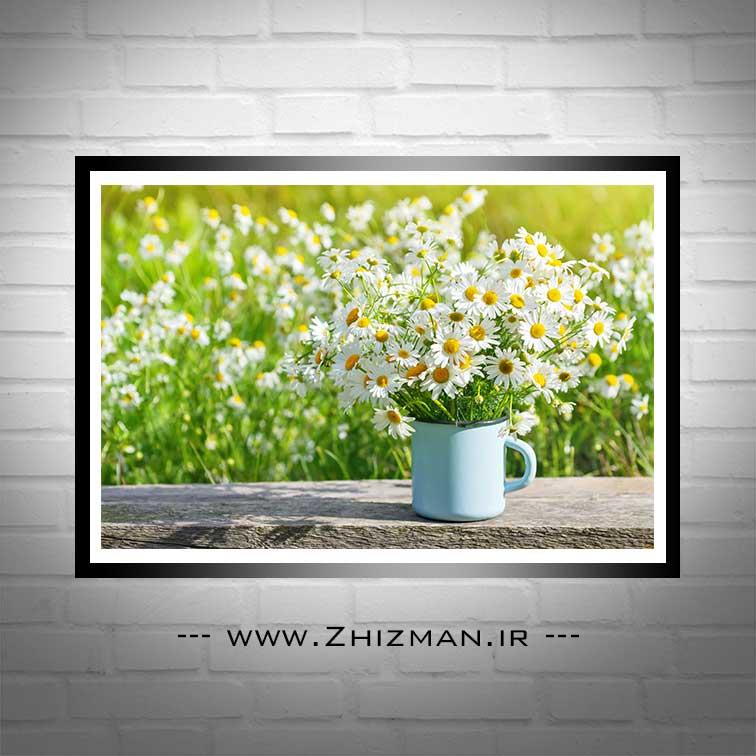 عکس گل بابونه سفید
